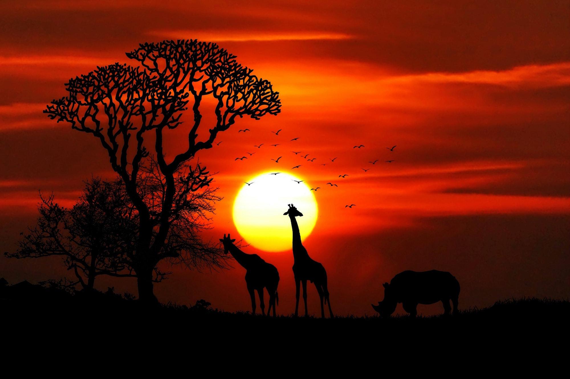 Les destinations les plus prisées - Safari Afrique