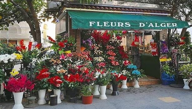 Décoration Fleurs d'Alger, Alger-Centre, Alger - 3ersi.com